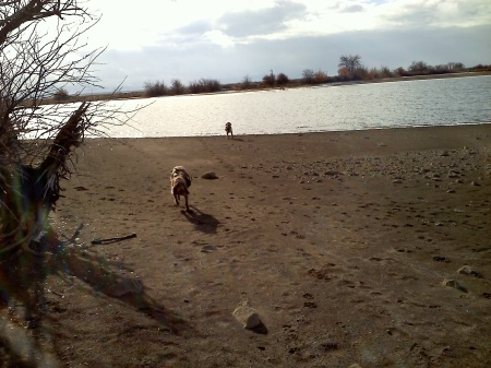 Elettra and Mia enjoy a run on the beach, 12-15-12.