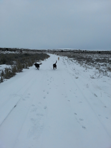 Sophie, Dakota and Elvis on the run, 2-9-13.