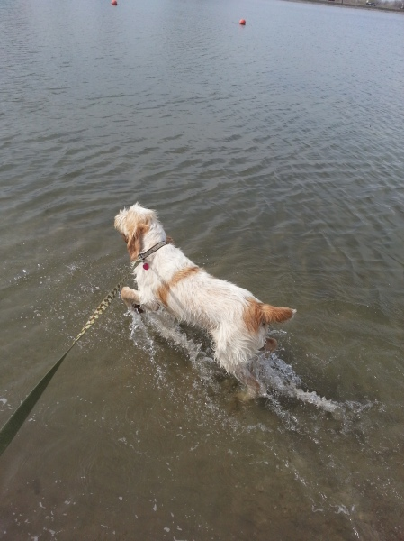 Doc took to the water like a fish, 5-3-13
