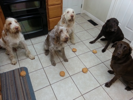Doc, Mia, Elvis, Sophie, and Dakota await the Okay to dive into their Arby's.