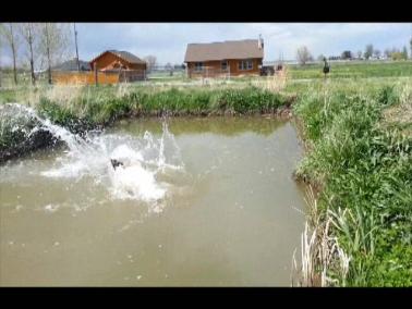 Dakota making a splash, 5-11-13