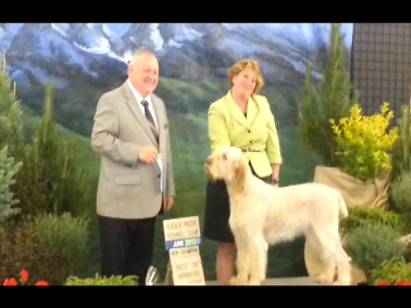 Elettra with handler Laura receiving ribbon for Champion title, 6-15-13