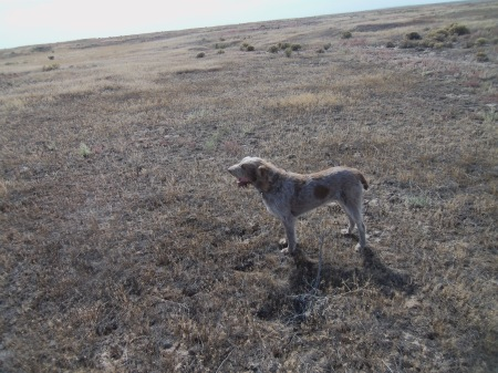 Mia tests the wind during our last hunt of the day.