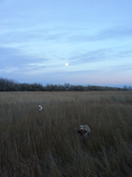 Shooting hours were over but Doc and Mia are still hunting in the moonlight.