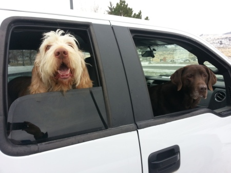 Elvis and Sophie patiently wait to visit the veteran's care facility for the first time.