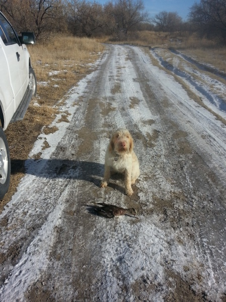 Doc poses with the duck he retrieved, 12-26-13.